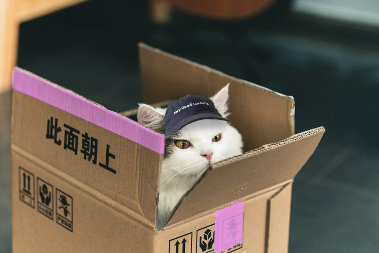 very-good-looking-cat-with-a-cap
